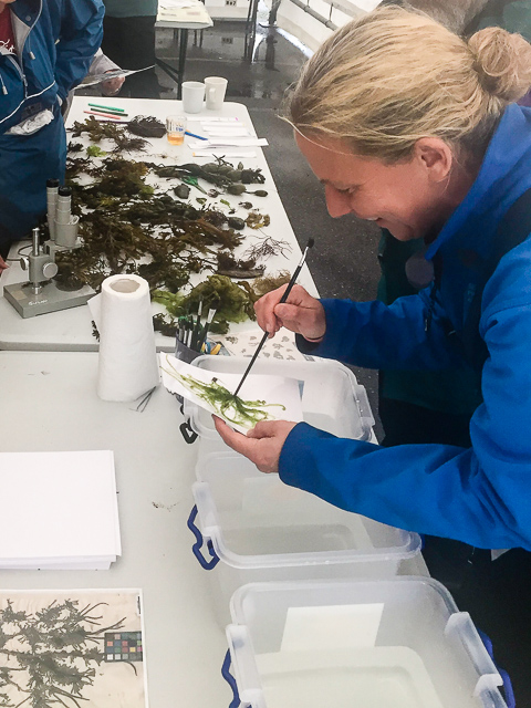 Whiddy Island Seaweed Event [Ellen Hutchins Festival]